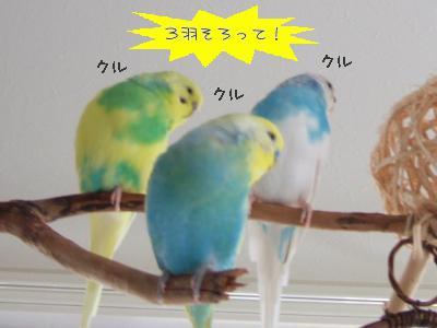 3羽揃って!