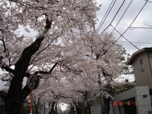 桜新町方面から深沢方面への一方通行の桜