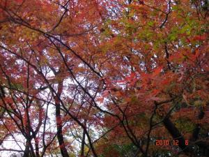 多摩川台公園の紅葉(もみじ)