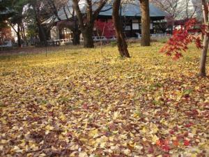 落ち葉のジュータン
