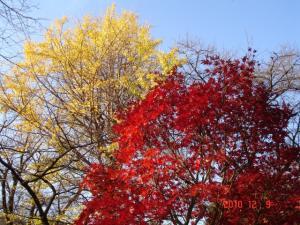 紅葉と黄葉のコントラスト