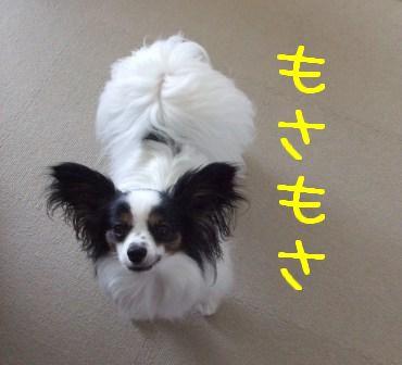 1005111.jpg