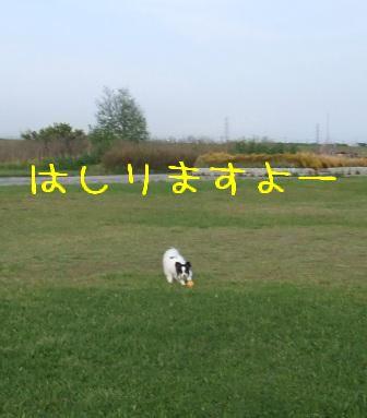 1005241.jpg