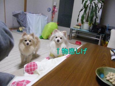 DSCF0943_convert_20100204032740.jpg