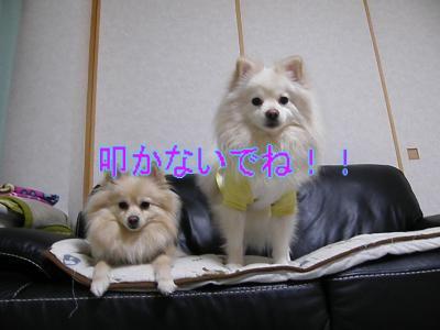 DSCF0974_convert_20100206035447.jpg