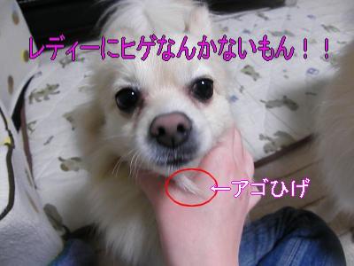 DSCF0999_convert_20100206035425.jpg