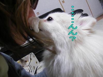 DSCF1007_convert_20100208022632.jpg
