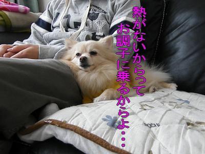 DSCF1017_convert_20100208022818.jpg