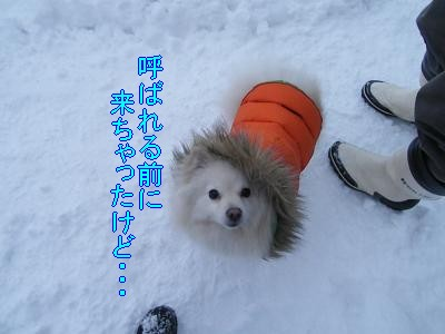DSCF1148_convert_20100210032747.jpg