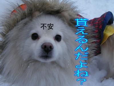 DSCF1157_convert_20100210032814.jpg