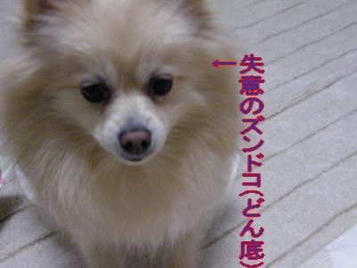 DSCF1595_convert_20100218031646.jpg