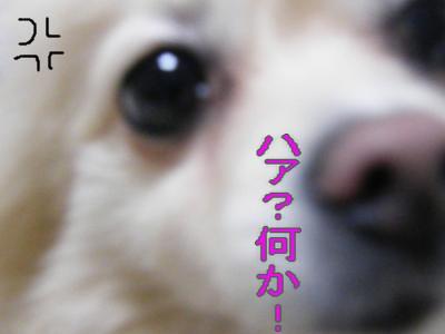 DSCF1596_convert_20100218031613.jpg
