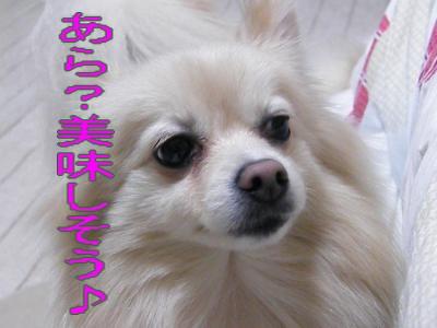 DSCF1600_convert_20100218031516.jpg