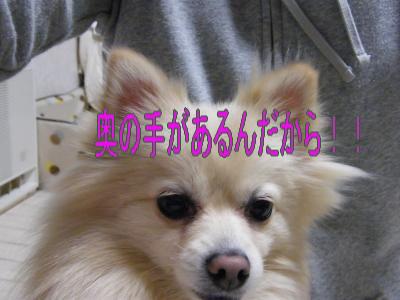 DSCF1609_convert_20100218031751.jpg