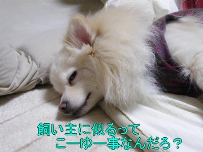 DSCF1611_convert_20100218031823.jpg
