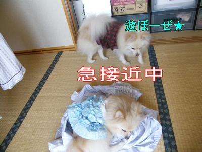 DSCF1622_convert_20100219034421.jpg