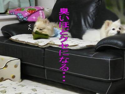 DSCF1656_convert_20100222032653.jpg