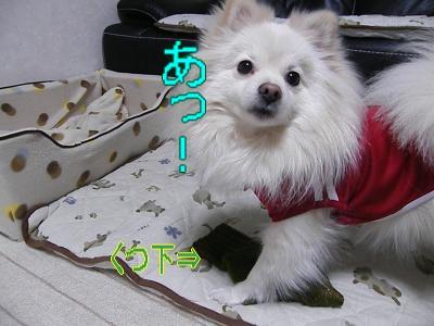 DSCF1667_convert_20100222032800.jpg