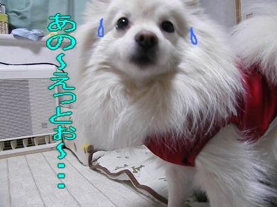 DSCF1668_convert_20100222032823.jpg