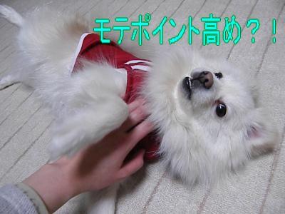DSCF1700_convert_20100221034447.jpg