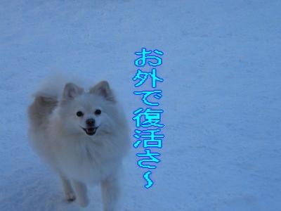 DSCF1788_convert_20100225035215.jpg