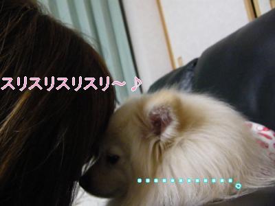 DSCF1911_convert_20100228033603.jpg