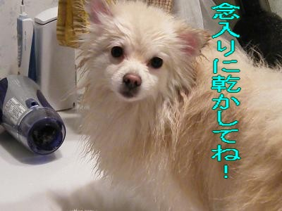 DSCF1949_convert_20100228034022.jpg