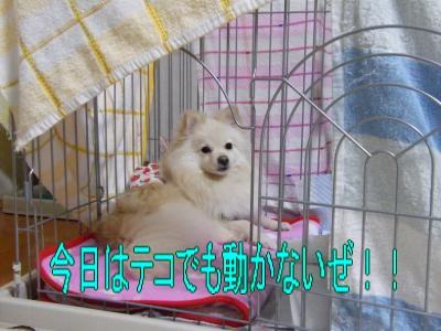 DSCF1952_convert_20100301004628.jpg