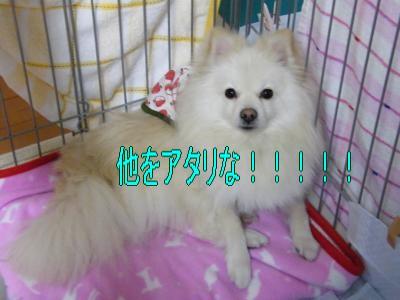 DSCF1954_convert_20100301004708.jpg