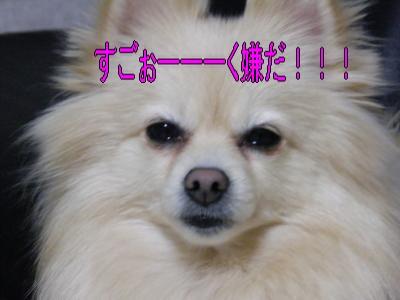 DSCF1958_convert_20100301004846.jpg