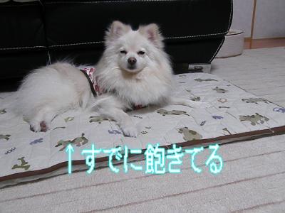 DSCF2003_convert_20100303003548.jpg