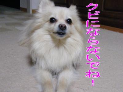 DSCF2045_convert_20100306051313.jpg