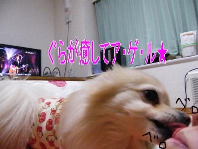 DSCF2047_convert_20100306051356.jpg