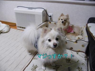 DSCF2057_convert_20100307050903.jpg