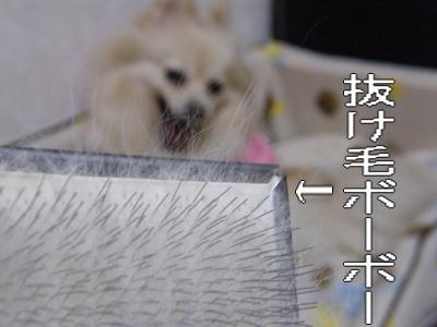 DSCF2079_convert_20100307051130.jpg