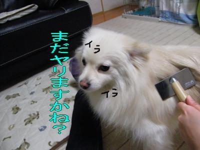 DSCF2085_convert_20100307051411.jpg