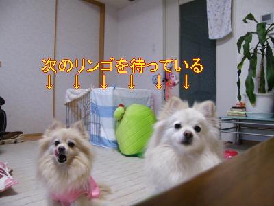 DSCF2103_convert_20100311010251.jpg