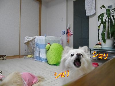 DSCF2104_convert_20100311010354.jpg