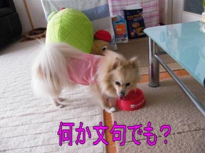 DSCF2162_convert_20100312055912.jpg