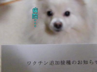 DSCF2186_convert_20100313043633.jpg