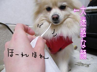 DSCF2299_convert_20100317022215.jpg