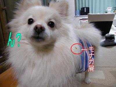 DSCF2334_convert_20100320043225.jpg