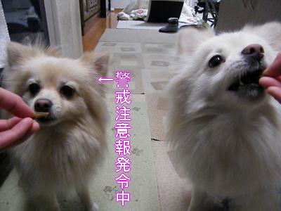 DSCF2355_convert_20100320043254.jpg
