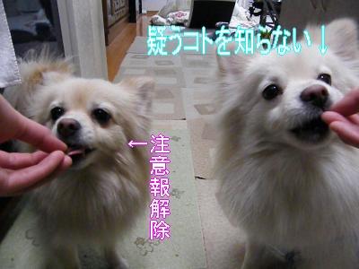 DSCF2359_convert_20100320043314.jpg