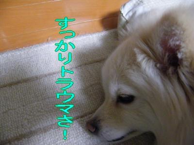 DSCF2465_convert_20100326005707.jpg