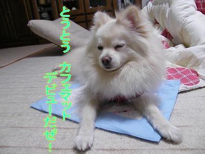 DSCF2605_convert_20100401014641.jpg