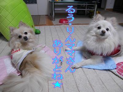 DSCF2607_convert_20100401014705.jpg