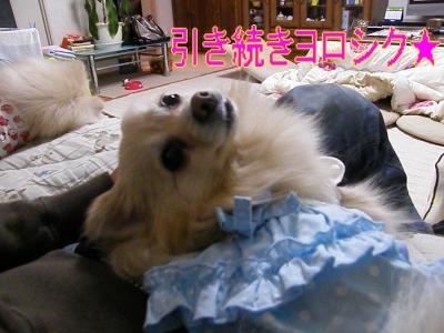 DSCF2709_convert_20100407044235.jpg