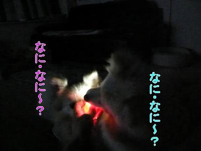 DSCF2717_convert_20100409012330.jpg