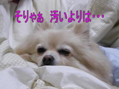DSCF2726_convert_20100411025603.jpg